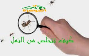 طرق الوقاية من النمل الأبيض