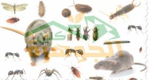 شركة مكافحة حشرات بجازان لمكافحة شاملة بالضمان