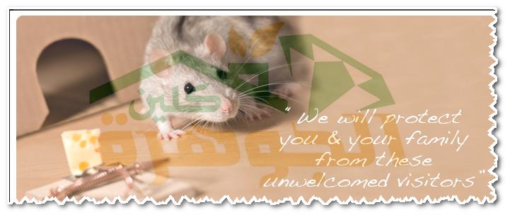 اسباب وجود الفئران بالمنزل