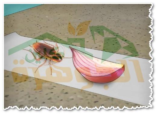 التخلص من الصراصير للابد بالاعشاب