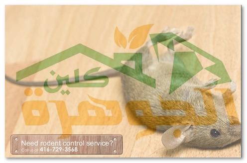 شركة مكافحة الفئران بإحساء 0578074829