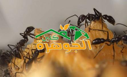 الصفرات لمكافحة النمل الابيض