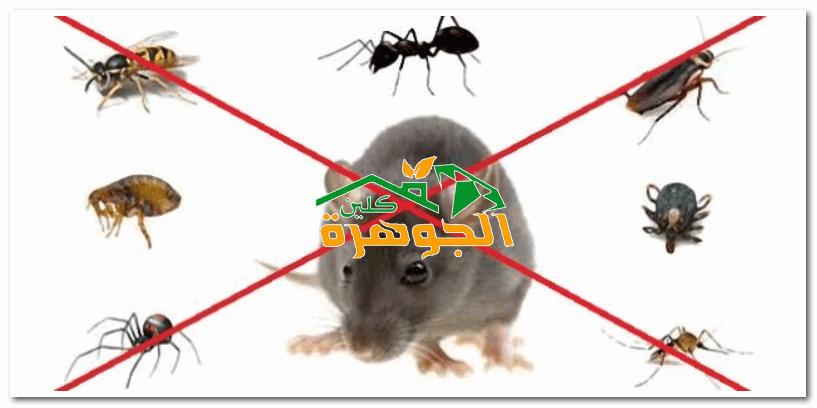أحدث أساليب مكافحة الحشرات والقوارض