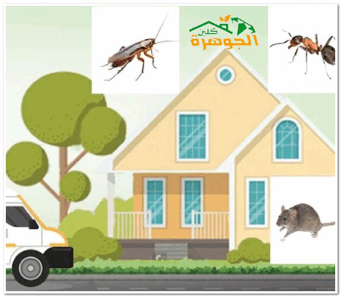 شركة مكافحة الحشراتبجدة