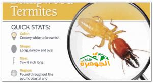 شركة مكافحة حشرات بجدة النمل الابيض