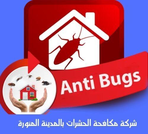 شركة مكافحة الحشرات بالمدينة المنورة 0598036676