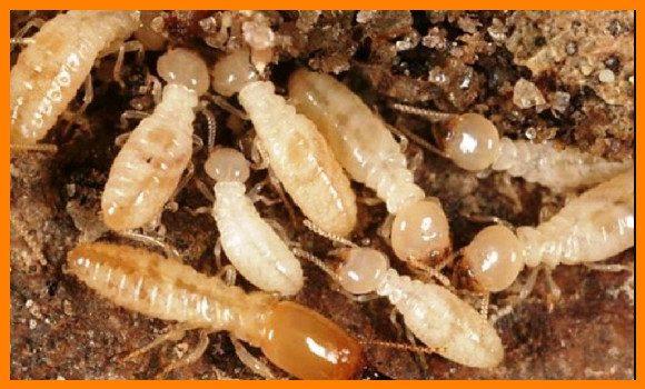 شركة مكافحة النمل الابيض بجازانللايجار 01025284450
