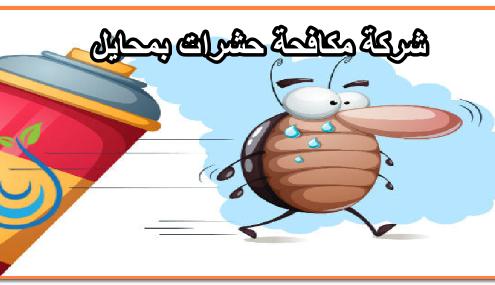 شركة مكافحة حشرات بمحايل