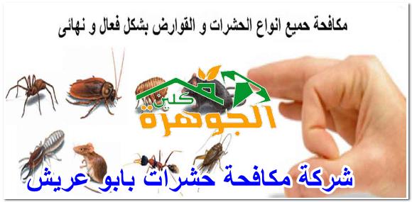 شركة مكافحة حشرات بابو عريش للايجار 01025284450
