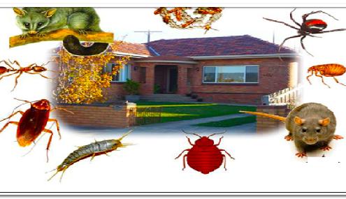 شركة مكافحة حشرات بالصامطة