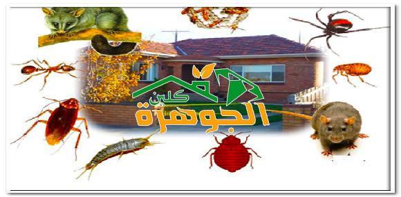 شركة مكافحة حشرات بصامطة