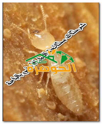 شركات مكافحة النمل الأبيض بالباحة