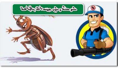 شركه رش مبيدات بالباحة