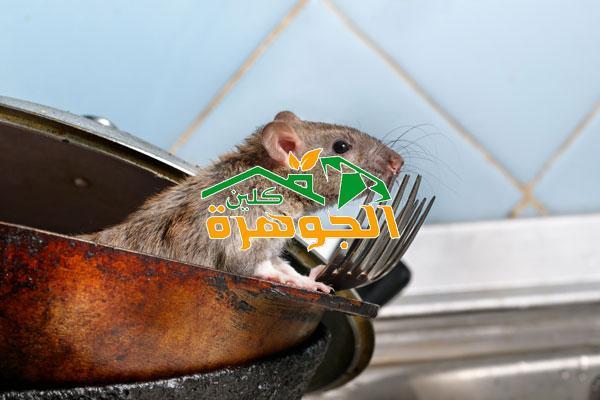 شركة مكافحة الفئران بالمدينة