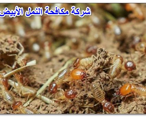 شركة مكافحة النمل الأبيض ابو عريش