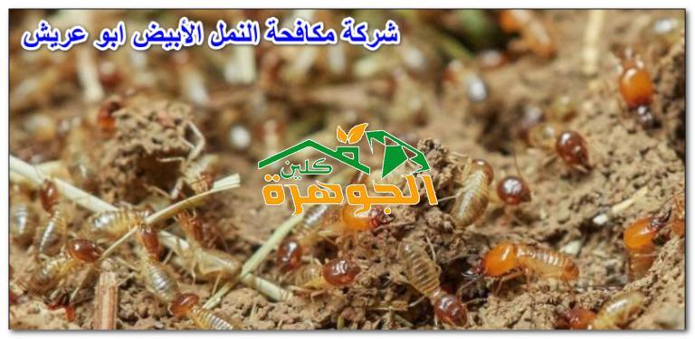 شركة مكافحة النمل الأبيض ابو عريش للايجار 01025284450