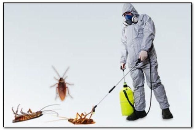 ارخص شركة رش حشرات بجدة