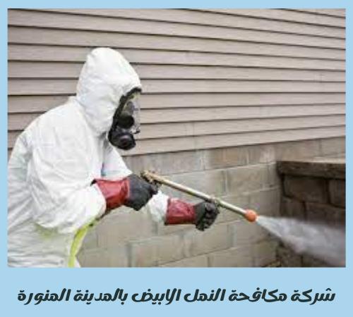 شركة مكافحة النمل الأبيض بالمدينة المنورة