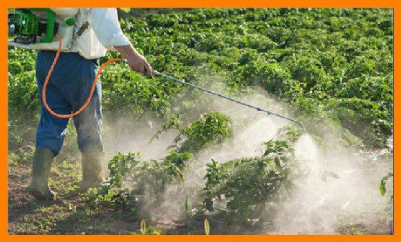 شركة رش مبيدات بفيفاء للايجار 01025284450