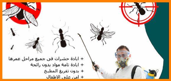 شركة مكافحة حشرات بأحد المسارحة للايجار 01025284450