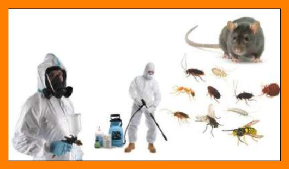 شركة مكافحة حشرات بفيفا للايجار 01025284450